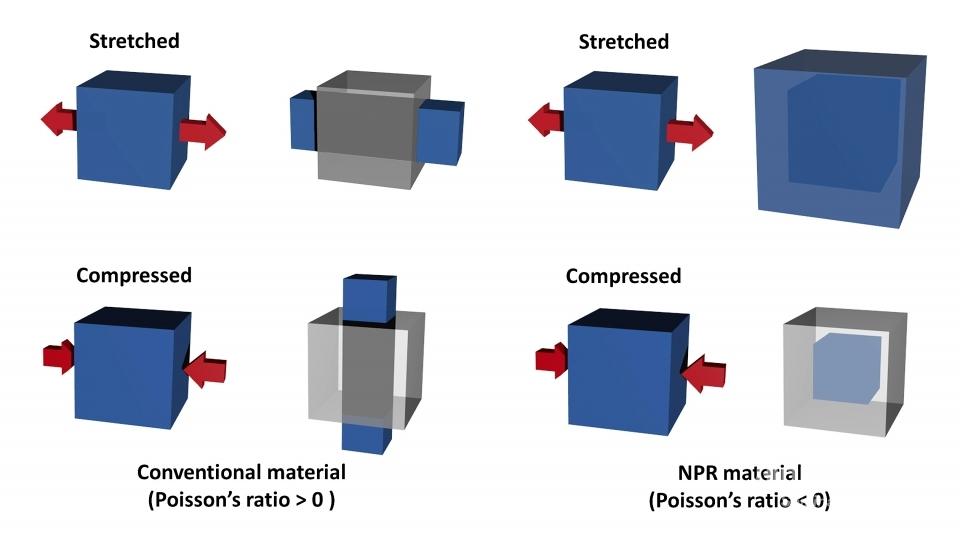 푸아송 비의 특성과 음성 푸아송 비의 특성에 따라 변형되는 물질의 모식도: (A) 자연계의 대부분 물질이 가지는 형태(푸아송 비 > 0). (B) 음성 푸아송 비를 가지는 물질의 형태(푸아송 비 < 0). 이 경우 물질은 압력이 주어진 방향과 수직 방향으로 수축하고(아래), 반대로 당기면 수직 방향으로 팽창하게 된다(위).
